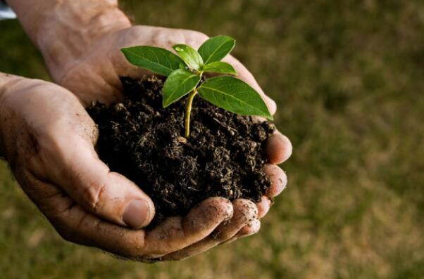 """土壤,地球脆弱又珍贵的""""皮肤"""""""