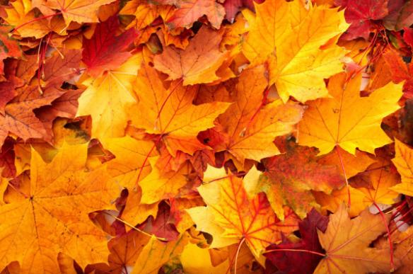 秋季用好两种叶