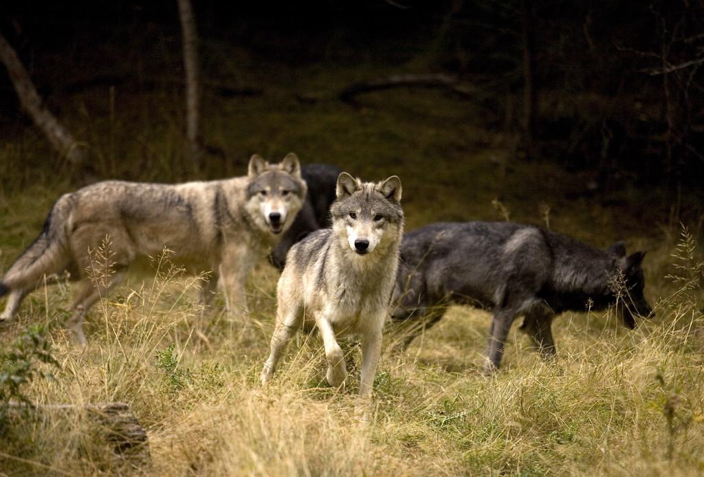 美國斯坦福大學最新研究:地球陸生脊椎動物滅絕速度仍在加快
