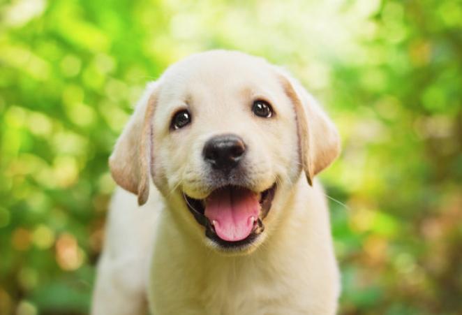 狗比猫能宽老人心