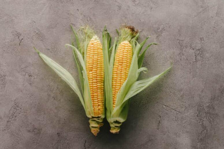 白茅根玉米须泡茶能消肿