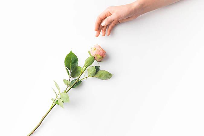 开在心里的玫瑰花可能更重要