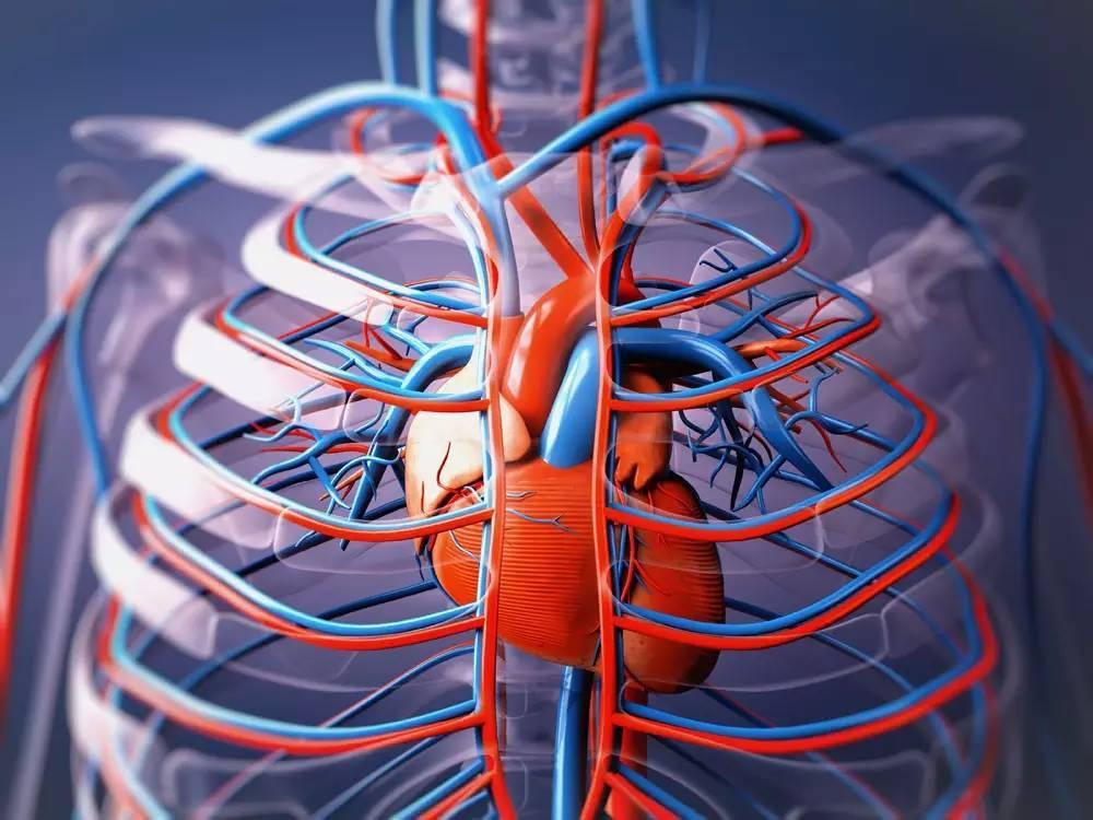 腹主動脈鈣化,心臟病快來了
