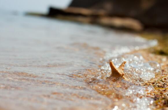 七平方米牡蛎礁净化一个泳池