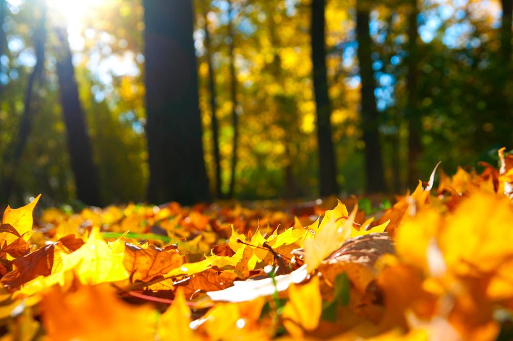 全球變暖,落葉反而早了