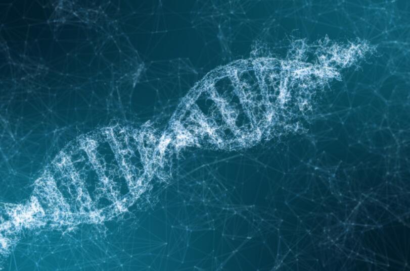 """人體自帶62個""""護胖""""基因"""